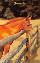 top004421 - Horse Post Card
