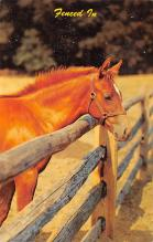 top004423 - Horse Post Card