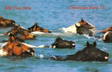 top004685 - Horse Post Card