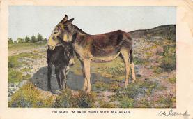 top004815 - Burro Post Card