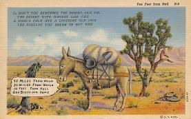 top004831 - Burro Post Card