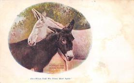 top004855 - Burro Post Card