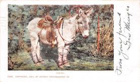 top004871 - Burro Post Card