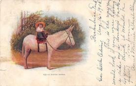 top004881 - Burro Post Card