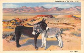 top004883 - Burro Post Card