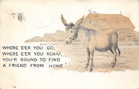 top004893 - Burro Post Card