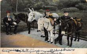 top004903 - Burro Post Card