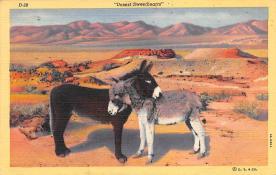 top004907 - Burro Post Card