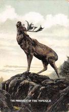 top004915 - Deer Post Card