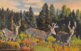 top004919 - Deer Post Card
