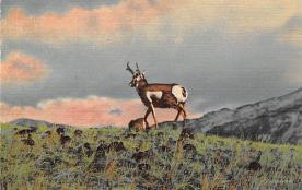top004921 - Deer Post Card
