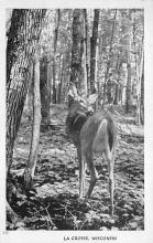 top004923 - Deer Post Card