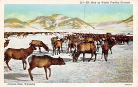 top004925 - Deer Post Card