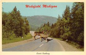 top004937 - Deer Post Card