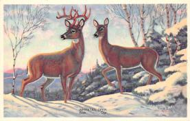 top004945 - Deer Post Card