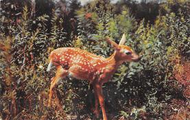 top004963 - Deer Post Card