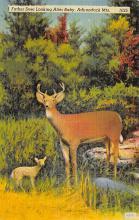 top004967 - Deer Post Card