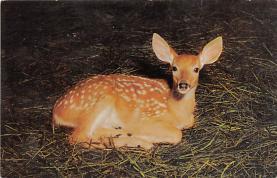 top004969 - Deer Post Card