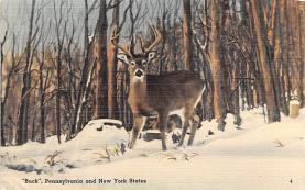 top004971 - Deer Post Card