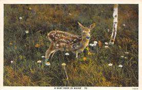 top004973 - Deer Post Card