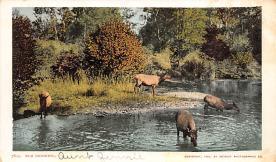top004977 - Deer Post Card