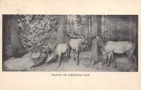 top004983 - Deer Post Card