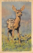top004989 - Deer Post Card