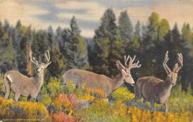 top004993 - Deer Post Card