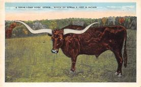 top004995 - Deer Post Card