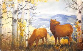 top004997 - Deer Post Card