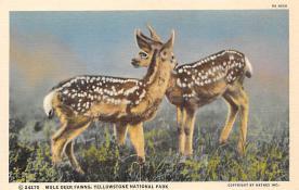 top005005 - Deer Post Card