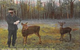 top005007 - Deer Post Card