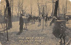 top005009 - Deer Post Card