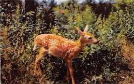 top005011 - Deer Post Card