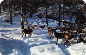 top005013 - Deer Post Card