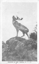 top005015 - Deer Post Card