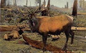 top005019 - Deer Post Card