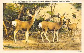 top005021 - Deer Post Card