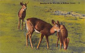 top005023 - Deer Post Card