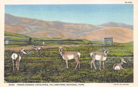 top005025 - Deer Post Card
