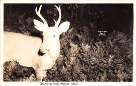 top005027 - Deer Post Card