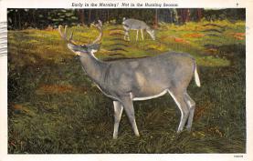 top005029 - Deer Post Card