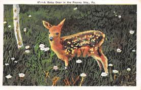 top005031 - Deer Post Card