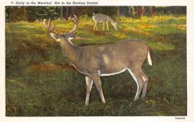 top005033 - Deer Post Card