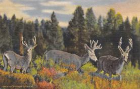 top005035 - Deer Post Card