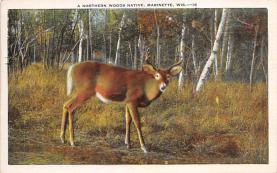 top005043 - Deer Post Card