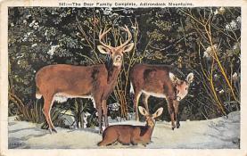top005045 - Deer Post Card