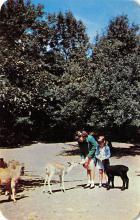 top005051 - Deer Post Card