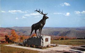top005053 - Deer Post Card