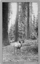 top005055 - Deer Post Card